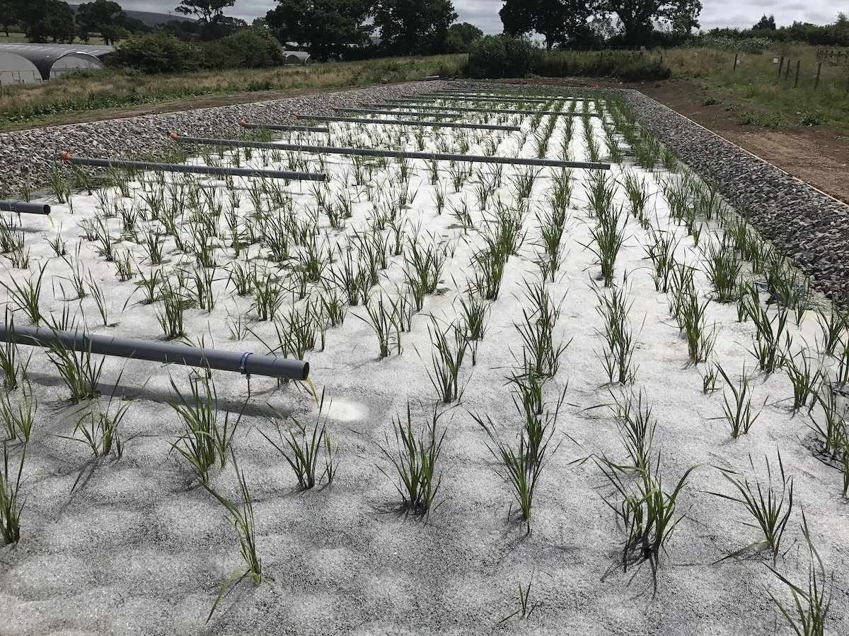 Sustainable Drainage Scheme (1)